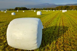 Silage Wraps