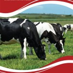 Dairy Range Brochure1