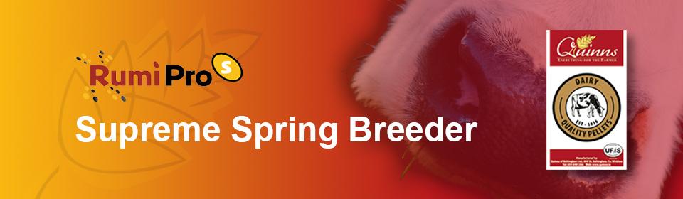 Quinns Supreme Spring Breeder