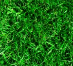Grass Growth Rate