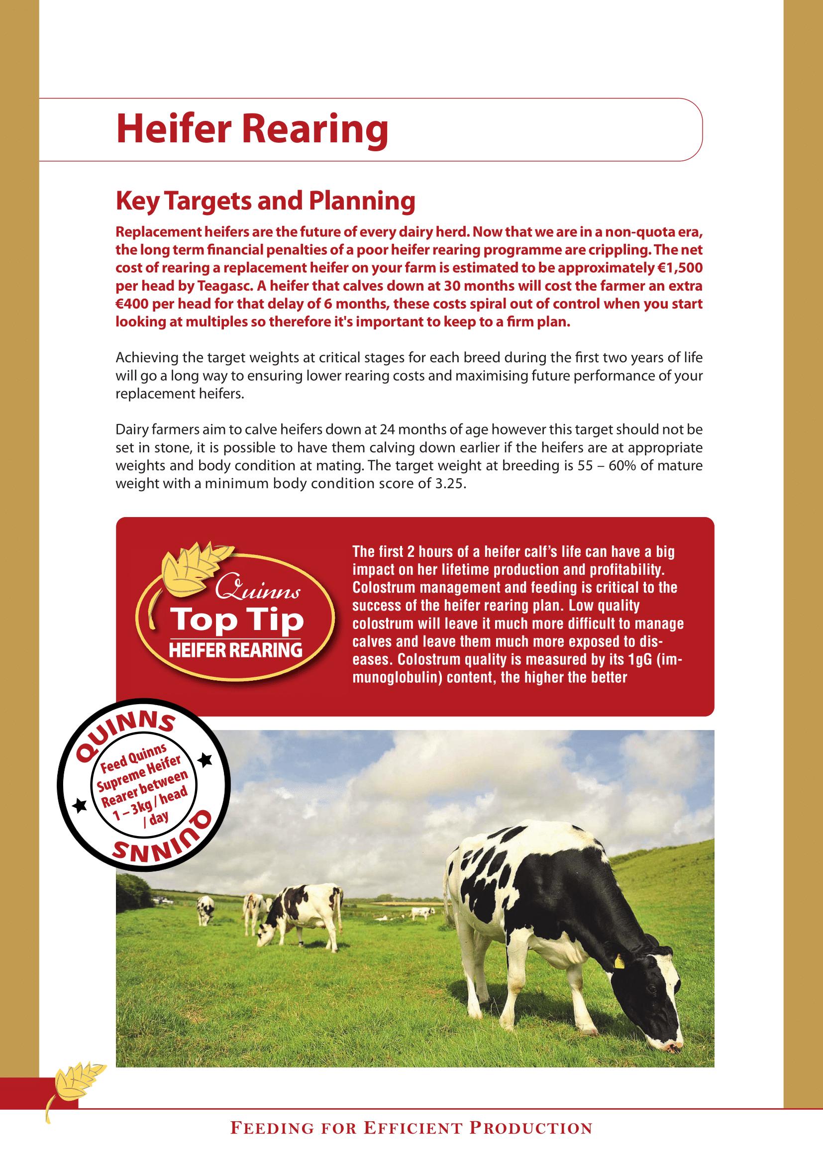 Heifer Rearing AW quality-1